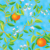 Floraison orange illustration libre de droits