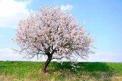 Floraison vernale. Image libre de droits