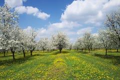 Floraison vernale. Image stock