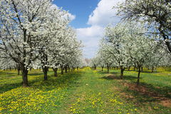 Floraison vernale. Images stock