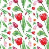 Floral σχέδιο άνοιξη Watercolor με τα λουλούδια τουλιπών, που απομονώνεται στο άσπρο υπόβαθρο Ζωηρόχρωμο άνευ ραφής βοτανικό σχέδ στοκ εικόνες