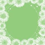Floral άκρη προτύπων πλαισίων chamomile Στοκ Φωτογραφία