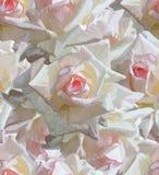 floral άνευ ραφής ανασκόπησης Στοκ φωτογραφία με δικαίωμα ελεύθερης χρήσης