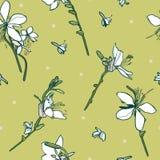 Floral άνευ ραφής διανυσματικό σχέδιο με τον άσπρο κρίνο απεικόνιση αποθεμάτων