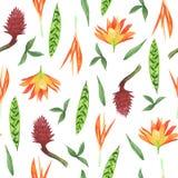Floral άνευ ραφής σχέδιο Watercolor Τροπικά λουλούδια διανυσματική απεικόνιση