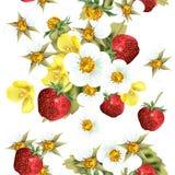 Floral άνευ ραφής σχέδιο με τα μούρα και τα λουλούδια φραουλών Στοκ Εικόνα