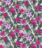 Floral άνευ ραφής σχέδιο με το φούξια και το ροζ Στοκ Φωτογραφίες