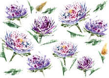 Floral άνευ ραφής σχέδιο watercolor αστέρων Στοκ Εικόνα