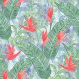 floral άνευ ραφής τροπικός προτύ&p Κόκκινα λουλούδια σε ένα ανοικτό μπλε υπόβαθρο απεικόνιση αποθεμάτων