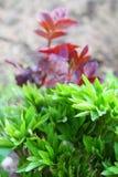 floral άνοιξη ανασκόπησης Στοκ Εικόνα