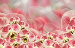 Floral άσπρος-κόκκινο υπόβαθρο orchids απεικόνισης σύνθεσης ανθοδεσμών θερινό διάνυσμα Phalaenopsis λουλουδιών σε ένα κόκκινος-άσ Στοκ φωτογραφία με δικαίωμα ελεύθερης χρήσης