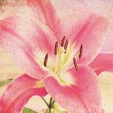 floral αναδρομικός ανασκόπηση&si Στοκ Φωτογραφία