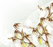 Floral αναδρομικό υπόβαθρο με τα άσπρα λουλούδια Στοκ εικόνες με δικαίωμα ελεύθερης χρήσης