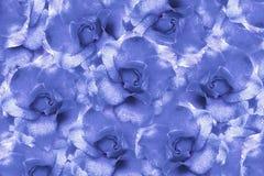 Floral ανοικτό μπλε υπόβαθρο από τα τριαντάφυλλα convolvulus σύνθεσης ανασκόπησης λευκό τουλιπών λουλουδιών Λουλούδια με τα σταγο Στοκ Εικόνες