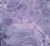 Floral ανοικτό μωβ όμορφο υπόβαθρο Ταπετσαρίες του ιώδης-μπλε convolvulus σύνθεσης ανασκόπησης λευκό τουλιπών λουλουδιών Στοκ Εικόνα