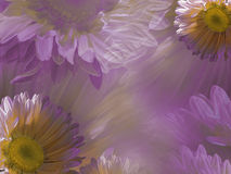 Floral ανοιχτό ροζ - άσπρο όμορφο υπόβαθρο της μαργαρίτας Ταπετσαρίες του ρόδινος-κίτρινου Chamomile λουλουδιών convolvulus σύνθε Στοκ Φωτογραφίες