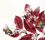 Floral απεικόνιση με τα λουλούδια και τις πεταλούδες Στοκ Φωτογραφίες