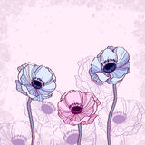 Floral απεικόνιση υποβάθρου Anemone Στοκ εικόνα με δικαίωμα ελεύθερης χρήσης