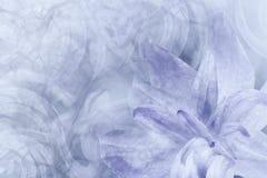 Floral αφηρημένος ελαφρύς γκρίζος - άσπρος-ιώδες υπόβαθρο Πέταλα ενός λουλουδιού κρίνων σε ένα άσπρος-ιώδες παγωμένο υπόβαθρο Κιν Στοκ εικόνες με δικαίωμα ελεύθερης χρήσης