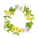 Floral, βοτανικό στεφάνι Χλόη, λουλούδια Πλαίσιο κύκλων Watercolour Στοκ εικόνες με δικαίωμα ελεύθερης χρήσης