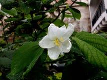 Floral λευκό 2 στοκ φωτογραφία