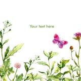 Floral ευχετήρια κάρτα Watercolor με τη χλόη και την πεταλούδα λιβαδιών Στοκ Εικόνες