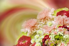 Floral ζωηρόχρωμο όμορφο υπόβαθρο Ανθοδέσμη των κόκκινος-ρόδινος-άσπρος-κίτρινων λουλουδιών convolvulus σύνθεσης ανασκόπησης λευκ Στοκ Εικόνα