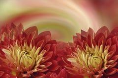 Floral ζωηρόχρωμο όμορφο υπόβαθρο Κόκκινος-κίτρινες ντάλιες λουλουδιών σε ένα χρωματισμένο υπόβαθρο χαιρετισμός καλή χρονιά καρτώ Στοκ Εικόνες