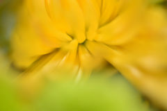Floral θαμπάδα Στοκ εικόνα με δικαίωμα ελεύθερης χρήσης