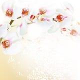 Floral διανυσματικό υπόβαθρο με τα ρεαλιστικά λουλούδια ορχιδεών Στοκ Εικόνες