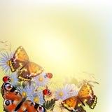 Floral διανυσματικό υπόβαθρο με τις πεταλούδες και τα λουλούδια Στοκ Εικόνες