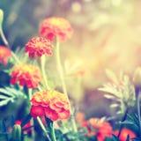 floral Ιστός θερινών προτύπων σελίδων χαιρετισμού καρτών ανασκόπησης καθολικός Στοκ Εικόνα