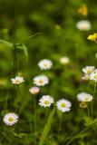 floral Ιστός θερινών προτύπων σελίδων χαιρετισμού καρτών ανασκόπησης καθολικός Από την εστίαση Στοκ Εικόνες