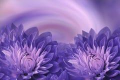 Floral ιώδης-ρόδινο όμορφο υπόβαθρο Πορφυρές ντάλιες λουλουδιών σε ένα χρωματισμένο υπόβαθρο χαιρετισμός καλή χρονιά καρτών του 2 Στοκ Εικόνες