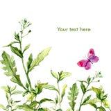 Floral κάρτα Watercolor με τη χλόη και την πεταλούδα λιβαδιών Στοκ Εικόνα