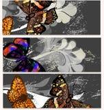 Floral κάρτες που τίθενται με τις πεταλούδες Στοκ Εικόνες