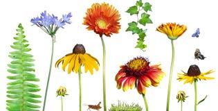 floral κήπος λουλουδιών Στοκ φωτογραφία με δικαίωμα ελεύθερης χρήσης