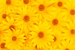 floral κίτρινος ανασκόπησης Στοκ φωτογραφία με δικαίωμα ελεύθερης χρήσης