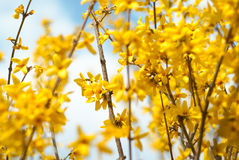 Floral κίτρινο λουλούδι συνόρων Στοκ φωτογραφίες με δικαίωμα ελεύθερης χρήσης