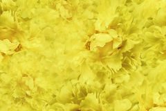 Floral κίτρινο όμορφο υπόβαθρο Ταπετσαρίες κίτρινου peony λουλουδιών convolvulus σύνθεσης ανασκόπησης λευκό τουλιπών λουλουδιών Κ Στοκ Εικόνες