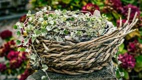 Floral καλάθι, διακόσμηση Στοκ φωτογραφία με δικαίωμα ελεύθερης χρήσης