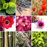 floral κολάζ Στοκ Φωτογραφία