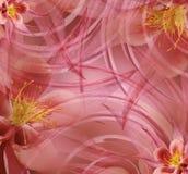 Floral κόκκινος-ρόδινο όμορφο υπόβαθρο Ταπετσαρίες του ανοιχτού ροζ - κίτρινου convolvulus σύνθεσης ανασκόπησης λευκό τουλιπών λο Στοκ φωτογραφίες με δικαίωμα ελεύθερης χρήσης