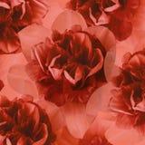 Floral κόκκινο υπόβαθρο των daffodils convolvulus σύνθεσης ανασκόπησης λευκό τουλιπών λουλουδιών Κινηματογράφηση σε πρώτο πλάνο Στοκ Εικόνα