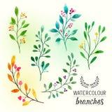 Floral κλάδοι Watercolour Στοκ εικόνες με δικαίωμα ελεύθερης χρήσης