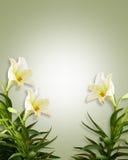 floral λευκό κρίνων Πάσχας ανασ& Στοκ φωτογραφία με δικαίωμα ελεύθερης χρήσης