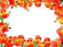 floral λουλουδιών πορτοκάλι φύλλων πλαισίων πράσινο Στοκ Εικόνα