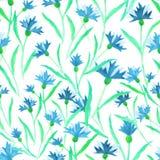 Floral μπλε διάνυσμα watercolor σχεδίων cornflowers άνευ ραφής διανυσματική απεικόνιση