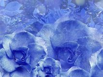 Floral μπλε υπόβαθρο από τα τριαντάφυλλα convolvulus σύνθεσης ανασκόπησης λευκό τουλιπών λουλουδιών Λουλούδια με τα σταγονίδια νε Στοκ Εικόνες