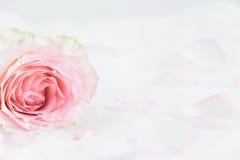 Floral ορισμένη φωτογραφία αποθεμάτων Στοκ φωτογραφία με δικαίωμα ελεύθερης χρήσης